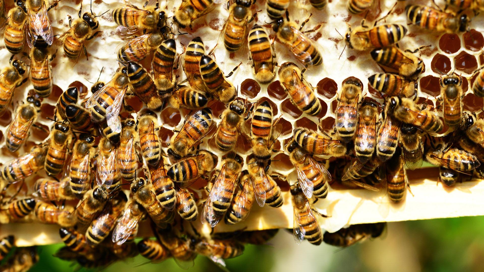 Bijen Leusden.